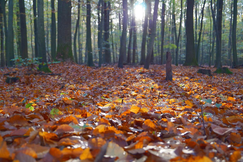 autumn leaves on ground